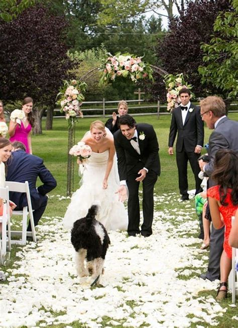 25  best ideas about Dog wedding on Pinterest   Weddings