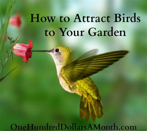 how to attract birds to your garden one hundred dollars