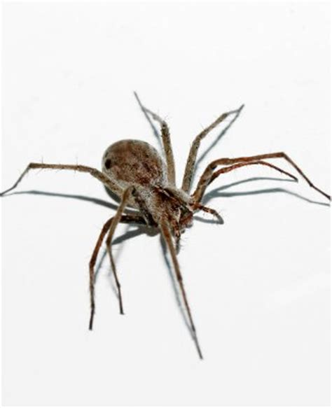 how to get rid of spiders in the house how to get rid of spiders bob vila