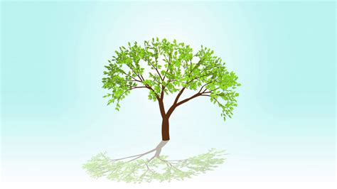 animation tree tree animations 28 images rendering artistic and