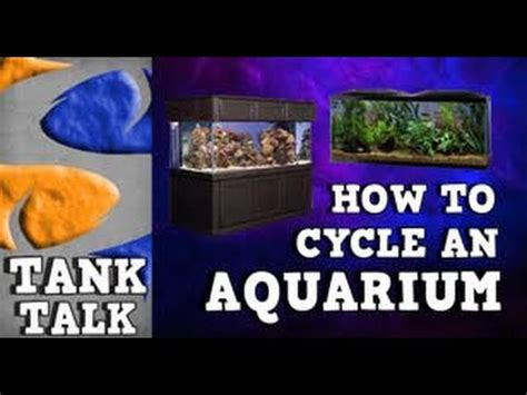 Do I Need To Cycle Tank If I Detox It by How To Cycle An Aquarium Tank Talk Presented By