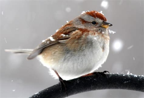 new england winter birds of new england com