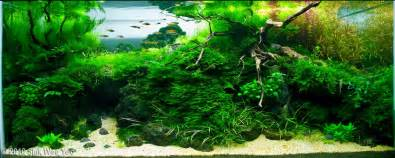 Aquascaping Techniques by Aquascape Exles Aquascapers