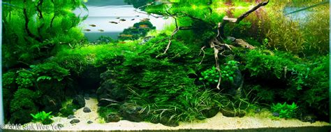 aquascape plant aquascape exles aquascapers