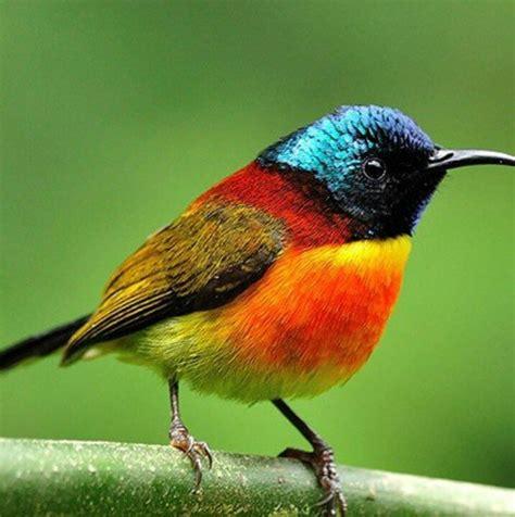 the sunbird green tailed sunbird m 233 z 233 s nekt 225 rev蜻k cukormad 225 rf 233 l 233 k