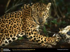 Photos Of Jaguar Jaguar Picture Jaguar Desktop Wallpaper Free Wallpapers
