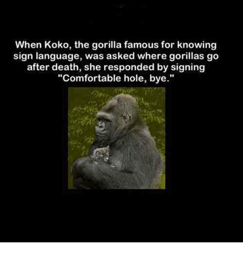 comfortable hole bye when koko the gorilla famous for knowing sign language was