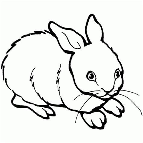 imagenes animales carnivoros para imprimir dibujos de animales domestico para colorear imagui
