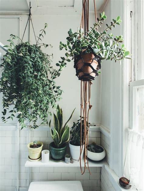 easy apartment plants 231 best ig hanging plants images on pinterest