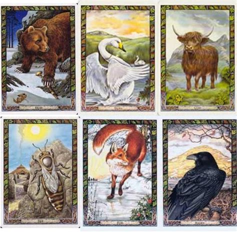 animal tarot cards a oracle and tarot cards the druid animal oracle deck