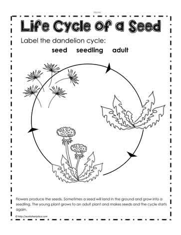 Plant Cycle Worksheet by Plant Cycle Worksheet 3rd Grade Www Pixshark Images Galleries With A Bite
