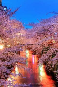 cherry tree karaoke the cherry blossom road into akasaka a day in tokyo japan cherry