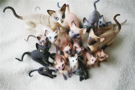 jointed doll cat cats bjd bjd pets