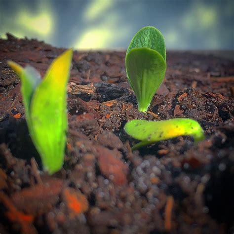 Vegetable Garden Soil Composition Investing In Organic Matter For Your Vegetable Garden Uf