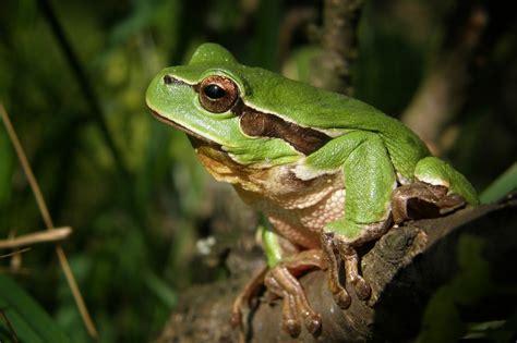 imagenes animales que saltan kikkers en padden dieren info