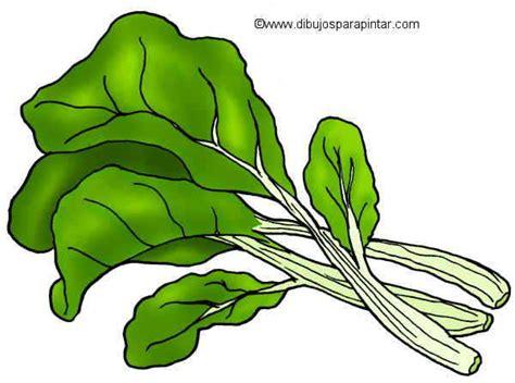 Planta Online dibujo de acelga