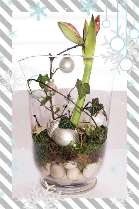 dekoration mit amaryllis weihnachtsdeko im glas videkiss