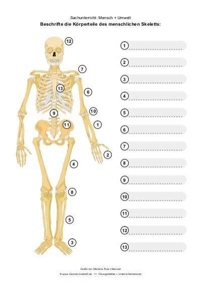 Beschriftung Skelett by Pin Skelet Mit Beschriftung On