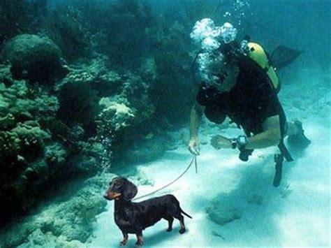 imagenes raras del fondo del mar al fondo del mar imagui