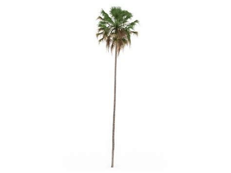 Thin Tree - and thin palm tree 3d model 3ds max files free