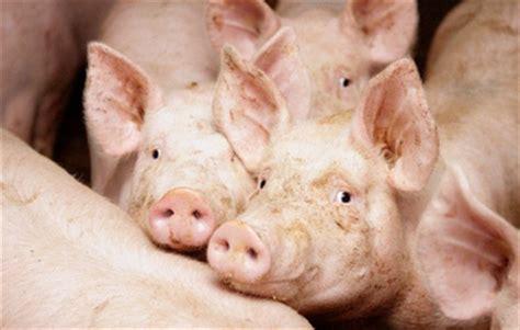 alimentazione maiali stati uniti nel 2014 pi 249 maiali pi 249 mais mangimi alimenti