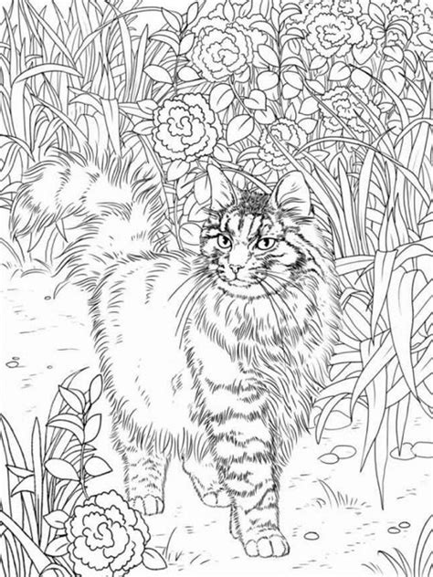 kitten coloring pages for adults best coloring books for cat lovers cleverpedia