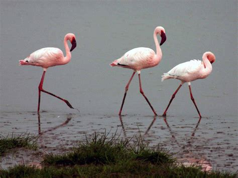 wallpaper with pink flamingos wallpapers flamingo wallpapers