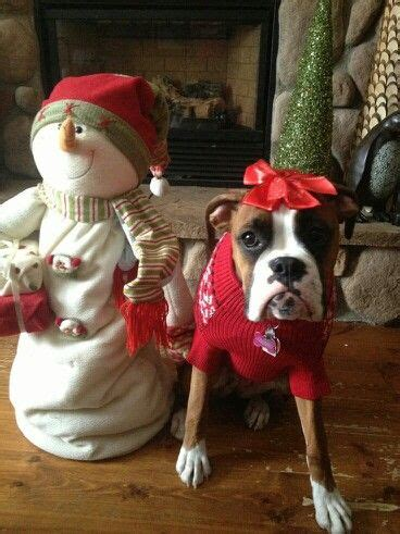 christmas dogs puppies images  pinterest christmas animals merry christmas