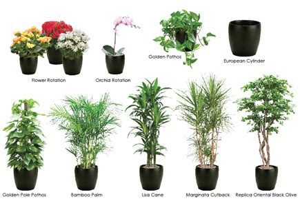 Best Plants For Office With No Windows Ideas Interior Design Tips And Decorating Ideas Home Designs March 2013