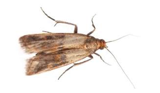 eliminate indian meal moth with lakewood exterminating