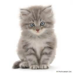 7 pictures pretty funny cats free download elsoar