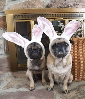 happy easter pug ljcfyi happy easter from the easter pugs