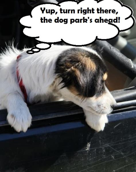 puppy whines in crate car crate daily discoveries