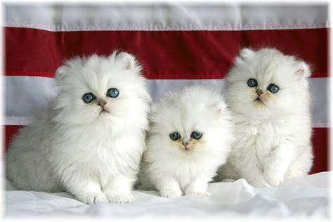 wallpaper cute cat desktop cute cat wallpapers free cute cat desktop wallpaper