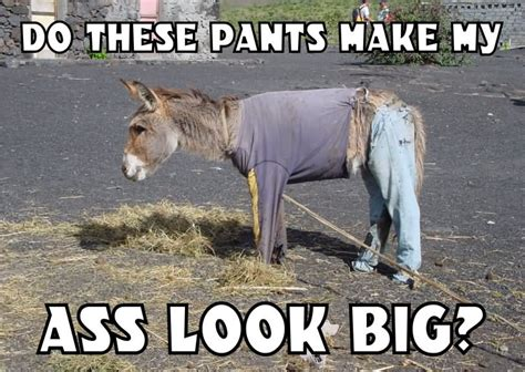 Funny Donkey Memes - do these pants make my ass look big funny meme