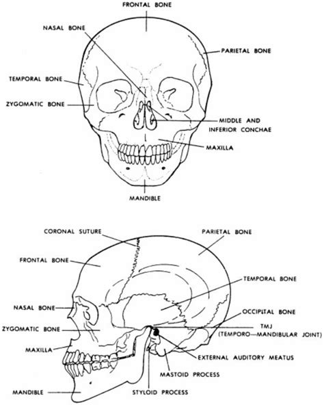 Anatomy For Dental Medicine tag and neck anatomy for dental medicine archives