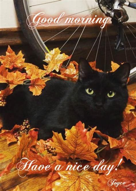 cute fall cartoon pictures images  pinterest baby turkey black cat art  black cats