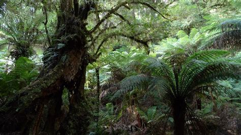 Rainforest Shoo gippsland roadtrip bulga and mt baw baw np eat code see