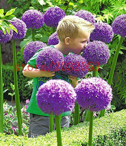 fiori da giardino foto piante da giardino fiorite come scegliere quelle giuste
