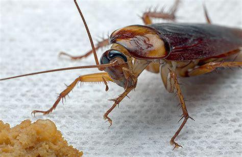 mittel gegen mücken in der wohnung folk heilmittel f 252 r kakerlaken in der wohnung