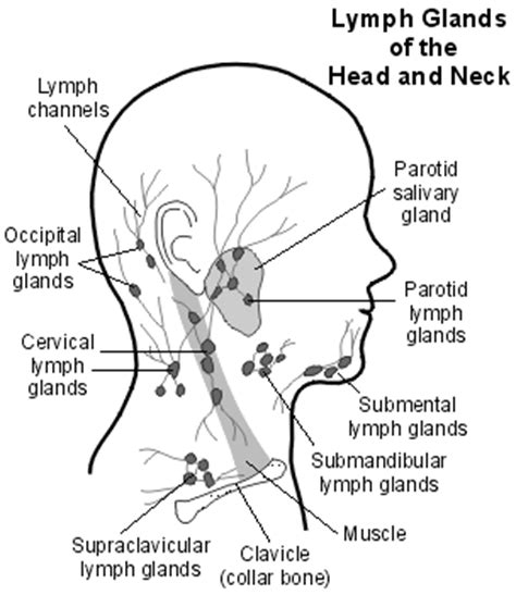 neck glands diagram simple food remedies blood cancer non hodgkin s lymphoma