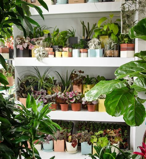 indoor plants nyc indoor potted plants delivered to your door the sill