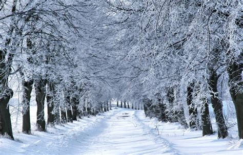 images of christmas winter wonderland winter wonderland the best place to celebrate christmas