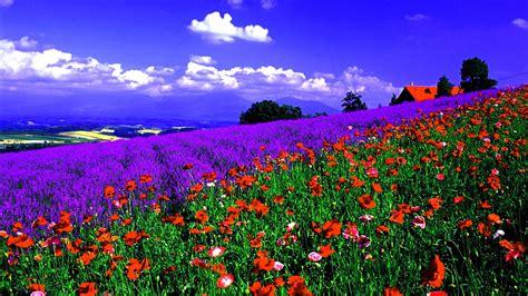 sfondi desktop primavera fiori sfondi primavera hd 71 immagini