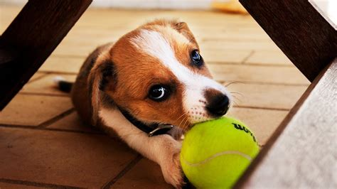 play with dogs tennis season the real boys you must see