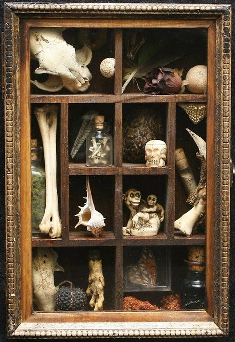 the cabinet of curiosities 1844 best cabinet of curiosities images on cabinet of curiosities shells and taxidermy