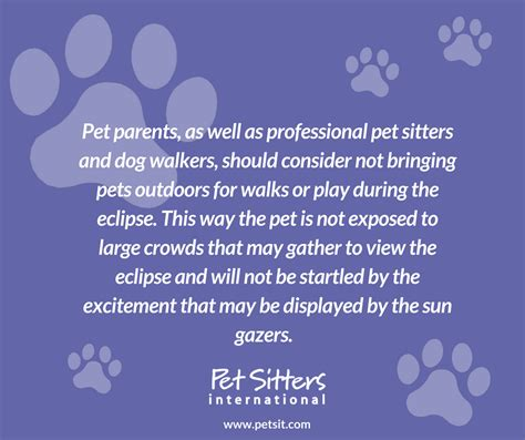 dogs and solar eclipse solar eclipse and pets how pet sitters walkers and pet owners can prepare
