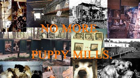my had 7 puppies riddle petition 183 barack obama make puppy mills illegal 183 change org