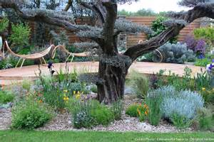 que planter sous un olivier d 233 tente jardin