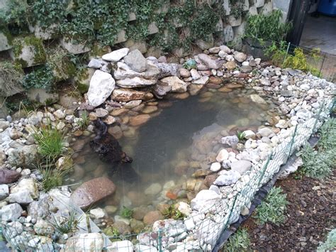 build a backyard pond and how to build a pond info turtle